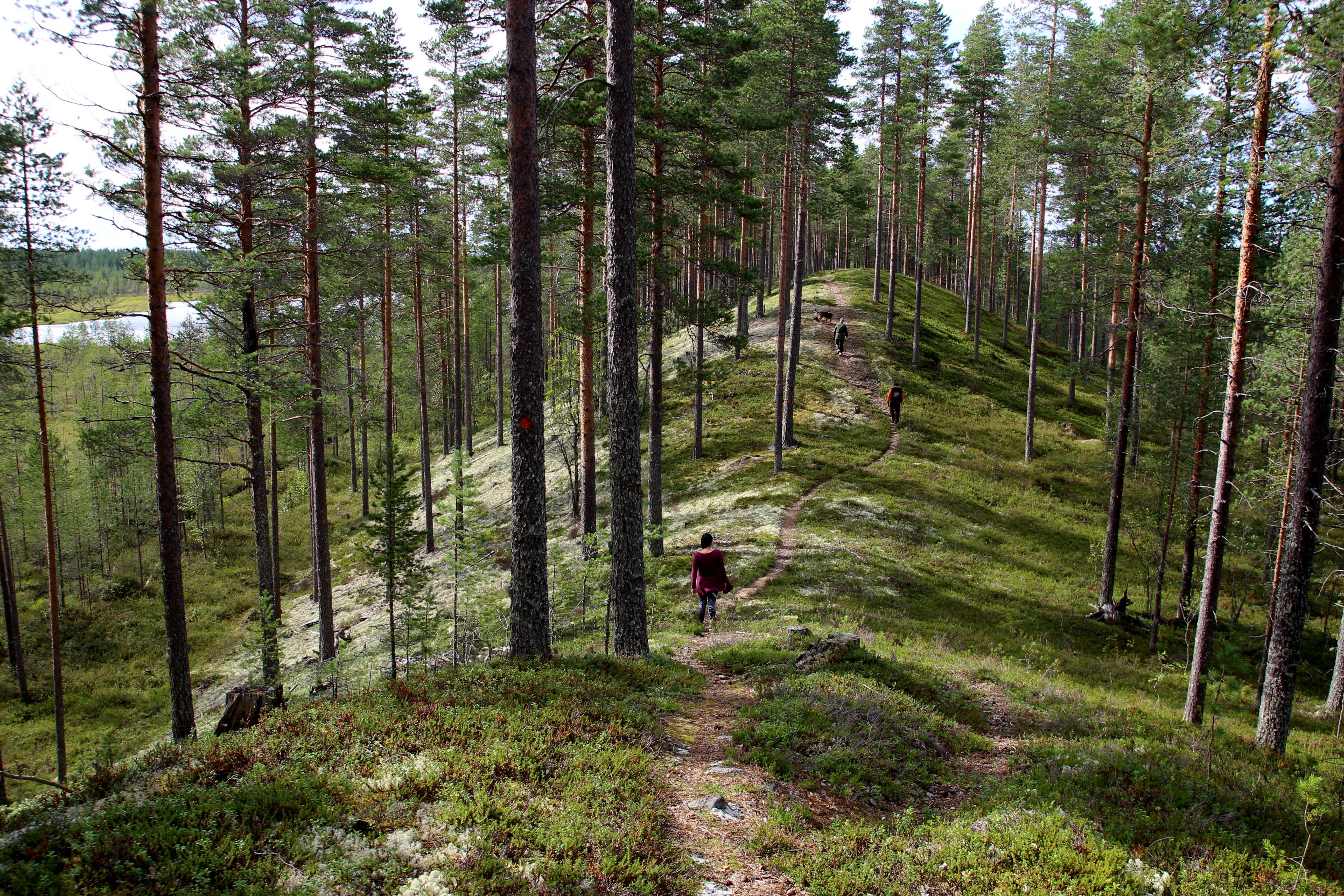 Harju hölkällä (harjuholkalla), Roine Piirainen/Kuvia Suomesta